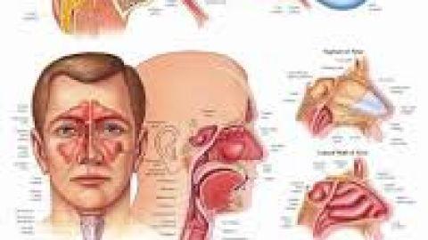 Otolaryngology ward
