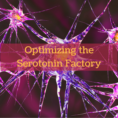 Serotonin: Helping us Feel Happy, Relaxed, and Self-Confident