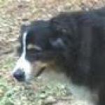 Profile picture of v2048274